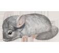 Chinchilla bébé - robe 1