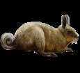 Viscache adulte - robe 52