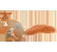 Écureuil adulte - robe 41