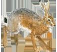 Lièvre brun adulte - robe 69