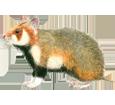 Grand hamster adulte - robe 39