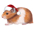 Hamster doré adulte - robe 117