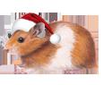 Hamster doré ##STADE## - robe 117